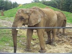 2013.10.26-007 éléphant