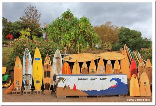 130715_SurfingGoatDairy_002