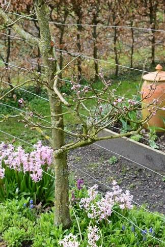 Hvorfor er danske haver så kedelige?   claus dalby   mit haveliv