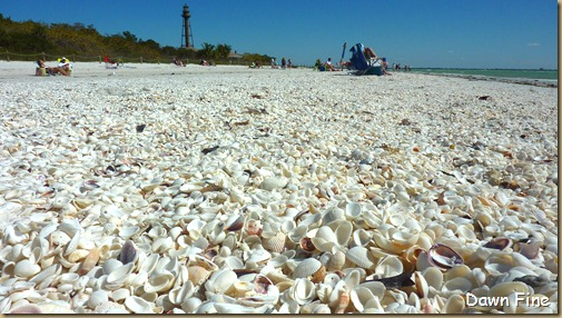 Sanibel Shell and birds_181