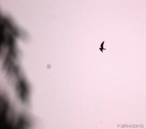 16. nighthawk-kab