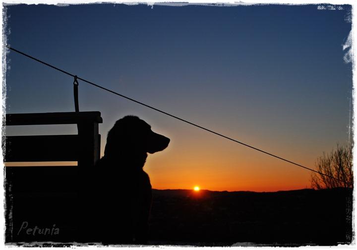 Jølle i solnedgang