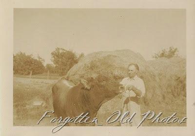 Man with a bull Tin Ceiling