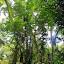 The Rainforest of the Daintree Discovery Centre - Oak Beach, Australia