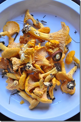 fresh chanterelles