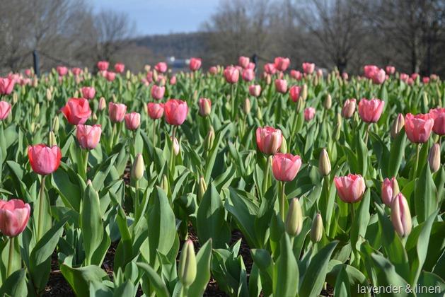 Spring 038