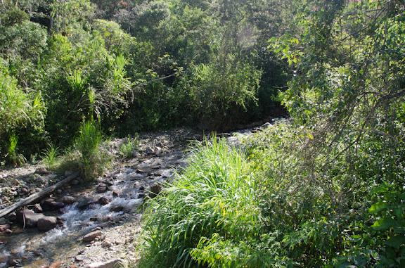 Près de Coroico à 1015 m d'alt. (Yungas, Bolivie), 14 octobre 2012. Photo : C. Basset