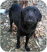 Toby from Staten Island, New York, is a black lab mix like Margo.