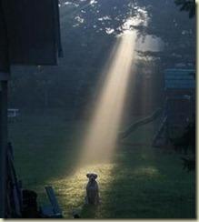 holydog