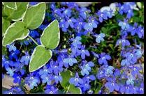 01e-flowers