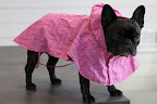 Wait, Sharkey!  Did you see these new raincoats with the bone pattern?  They are certainly made for adventuring!