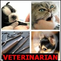 VETERINARI- Whats The Word AnswersAN
