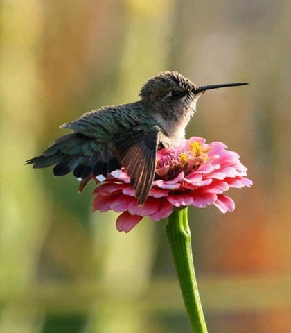 passarinho na flor-bird in the flower