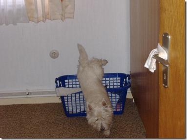 2005_10 Max verbuddelt Knochen (3)