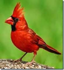 Cardinal-totem