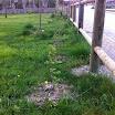 2014-04-12-plantas-sotosalbos.jpg