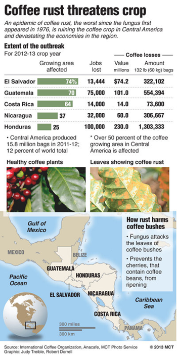 Coffee rust threatens crops in Central America. An epidemic of coffee rust, the worst since the fungus first appeared in 1976, is ruining the coffee crop in Central America and devastating economies in the region. Graphic: McClatchy