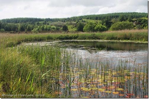 10-Glenwhan-Moor