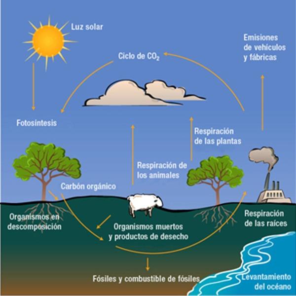 ciclo-del-carbono-para-ninos
