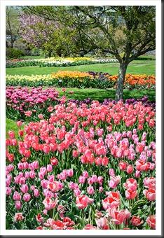 Springtime at Hershey Gardens