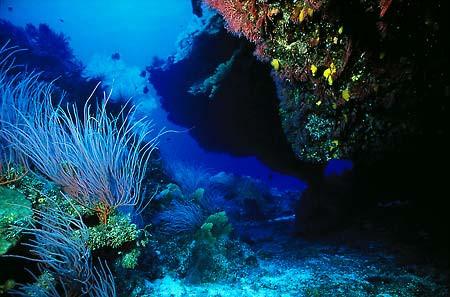 Great Barrier Reef coral Gardens.jpg