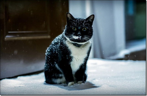 cats-play-snow-26