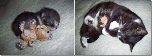 Antes e Depois de Animais de Estimação (4)