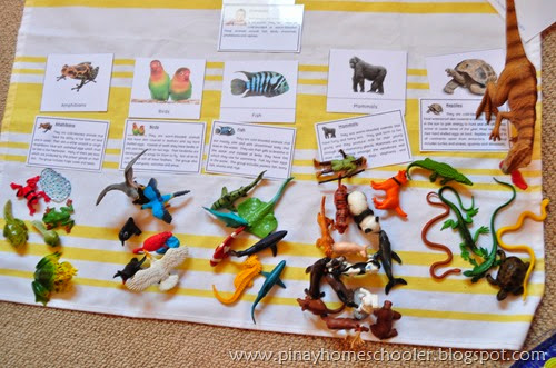 Introducing Vertebrate Animals to Kids