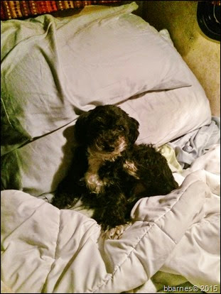 Maggie bedtime 01022015