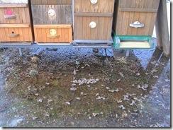 potopa včeliček 20,02,2012 038