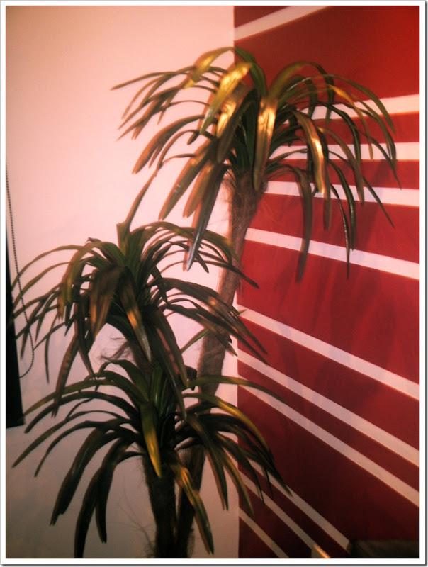 Yucca 01