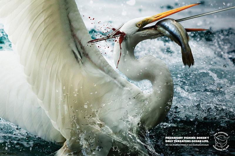Harpoon egret