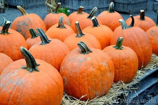 pumpkinblog8
