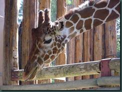 Fresno Zoo 004