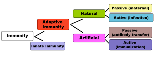 Difference between Active and Passive Immunity | Major Differences