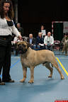 20130510-Bullmastiff-Worldcup-0248.jpg
