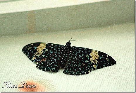 FPC_Butterfly_Blue_Spots
