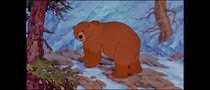 08 l'ourse (la mère de Koda)