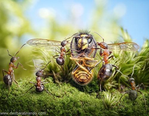 formigas inacreditaveis incriveis desbaratinando  (37)