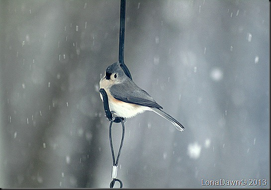 Titmouse_Snow_Feb