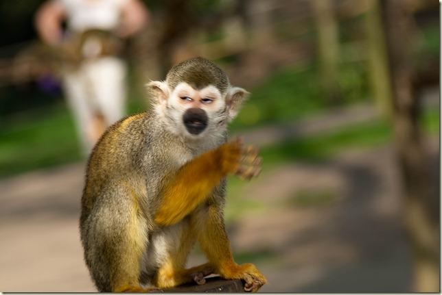 monkey-1-3
