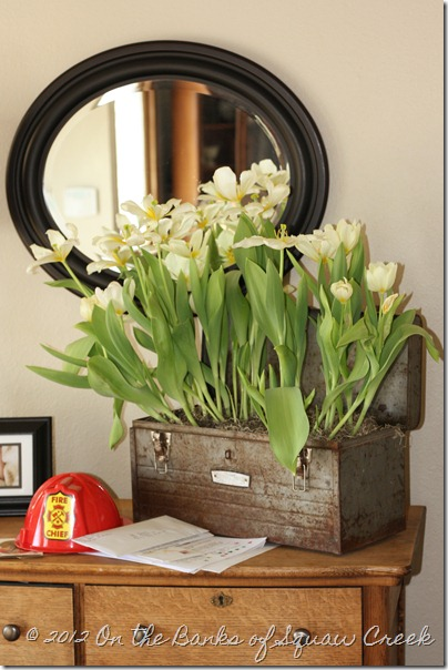 Tulips in a Toolbox