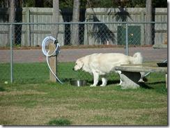 Jackson in Dogpark (1)