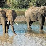 Бали. Сафари на слонах 6.jpg