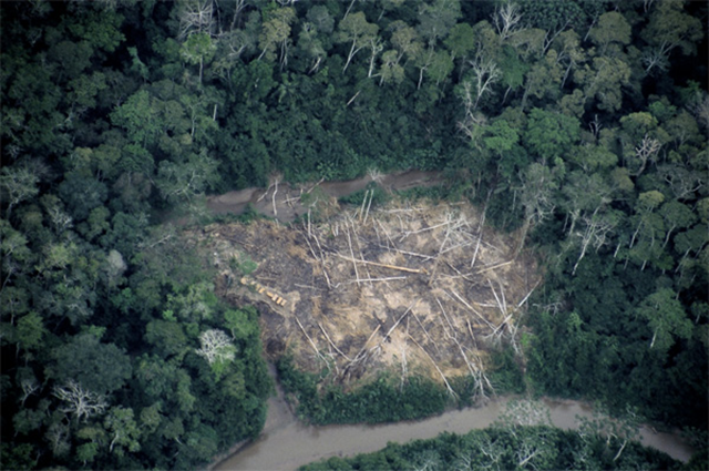 Aerial view of an illegal logging camp located on the border of the Alto Purús National Park near the Sepahua River in Peru. Photo: Chris Fagan / Upper Amazon Conservancy (UAC)