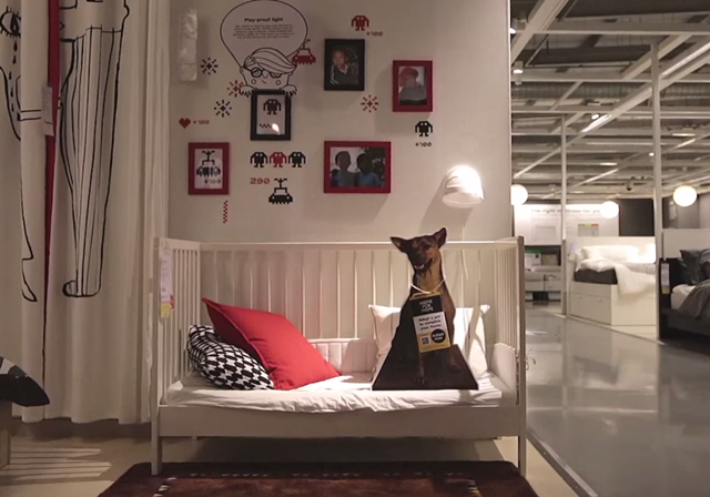 IKEA and Dogs 03