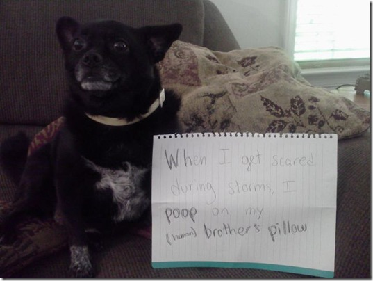 dog-shaming-bad-11