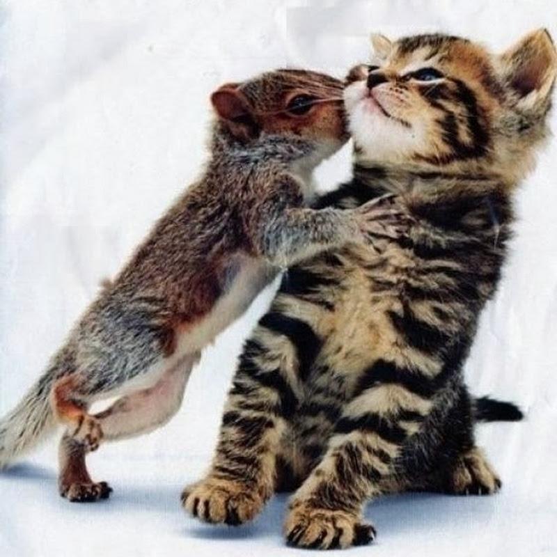 Kisah Cinta Seekor Tupai dan Anak Kucing