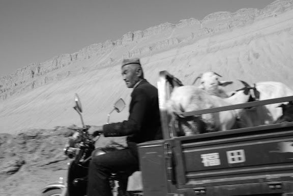Flaming mountains - Moto-truck chèvres montagnes