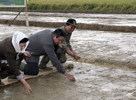Presiden SBY dan Ibu Ani foto bersama menanam padi